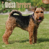 Welsh Terriers - 2016 Calendar Calendars