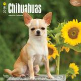 Chihuahuas - 2016 Calendar Calendars