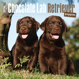 Chocolate Labrador Retriever Puppies - 2016 Calendar Calendars