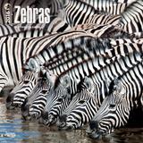 Zebras - 2016 Calendar Calendars