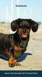 Dachshunds - 2016 Two-Year Pocket Planner Calendars
