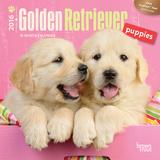 Golden Retriever Puppies - 2016 Mini Wall Calendar Calendars