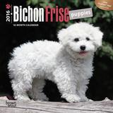 Bichon Frise Puppies - 2016 Mini Wall Calendar Calendars