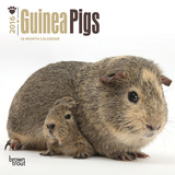 Guinea Pigs - 2016 Mini Wall Calendar Calendars