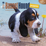 Basset Hound Puppies - 2016 Mini Wall Calendar Calendars