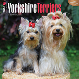 Yorkshire Terriers - 2016 18 Month Calendar Calendars