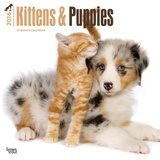 Kittens & Puppies - 2016 Calendar Calendars