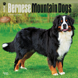 Bernese Mountain Dogs - 2016 Calendar Calendars