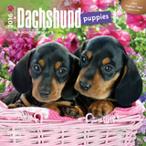Dachshund Puppies - 2016 Mini Wall Calendar Calendars