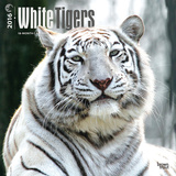 White Tigers - 2016 Calendar Calendars