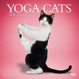 Yoga Cats - 2016 Calendar Calendarios
