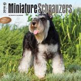 Miniature Schnauzers - 2016 Calendar Calendars