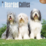 Bearded Collies - 2016 Calendar Calendars