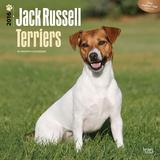Jack Russell Terriers - 2016 Calendar Calendars