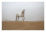 White Stallion Prints by Sally Linden