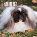 Pekingese - 2016 Calendar Calendars