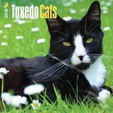 Tuxedo Cats - 2016 Calendar Calendars