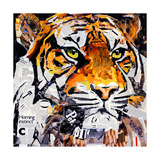 Hello Tiger Giclee Print by James Grey