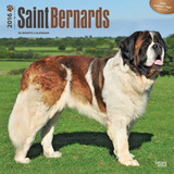 Saint Bernards - 2016 Calendar Calendars