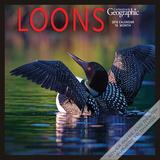 Loons - 2016 Calendar Calendars