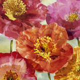 Playful Poppies I Prints by Tania Bello
