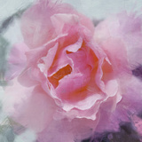 Elegant Bloom II Prints by Malcolm Sanders