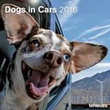 Dogs in Cars - 2016 Calendar Calendars