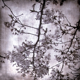 Twilight Blossom I Prints by Tony Koukos