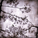 Twilight Blossom II Prints by Tony Koukos