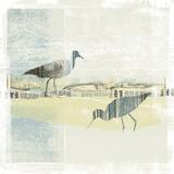 Coastal Birds I Poster par Ken Hurd