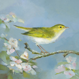Woodland Birds III Prints by Sarah Simpson