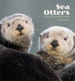 Sea Otters - 2016 Calendar Calendars