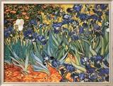 Schwertlilien Kunstdrucke von Vincent van Gogh