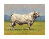 Charolais Bull Premium Giclee Print by Peter Munro