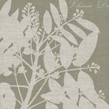 Botanique I Prints by Maria Mendez