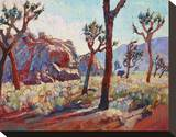 Joshua in Light Stretched Canvas Print by Erin Hanson