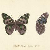 Papilio Nymph Cardui Fabr Giclée-tryk af A. Poiteau