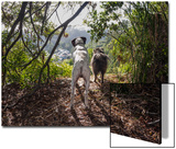 Two Dogs in Woods with View Prints by Henri Silberman