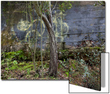 Tree and Graffiti Wall (Oakland, CA) Poster by Henri Silberman