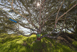 Painted Tree, Albany Bulb (Graffiti, Branches) Wall Decal by Henri Silberman