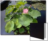 Lotus Blossom Brooklyn Botanic Gardens - Lily Pond Lotus Plant Posters by Henri Silberman