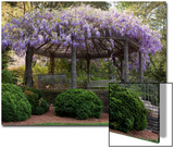 Wisteria Arbor, Duke Gardens, Durham, NC (Purple Spring Flowers) Prints by Henri Silberman