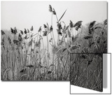 Prospect Park Lake With Grasses - Botanical Landscape Brooklyn Posters by Henri Silberman