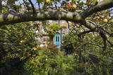 Garden with Apple Tree and Blue Door Wall Decal by Henri Silberman