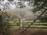 Wooden Gate to Ranch (Fog in Morning, Oakland, CA) Wall Decal by Henri Silberman