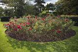 Rose Bed Kew Gaardens (English Garden Scene) Muursticker van Henri Silberman