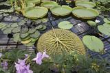 Lily Pads, Kew Gardens (Green House Lily Pond, England) Muursticker van Henri Silberman