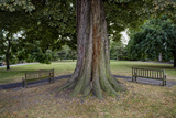 Tree and Two Benches, St. Peter's Square, Hammersmith, London (Urban Park, Horse Chestnut) Wall Decal by Henri Silberman