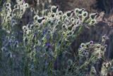 Sun Lit Wild Flowers with Centers, Redwood Regional Park Muursticker van Henri Silberman
