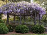 Wisteria Arbor, Duke Gardens, Durham, NC (Purple Spring Flowers) Metal Print by Henri Silberman